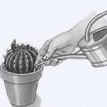 Как часто поливать кактусы?