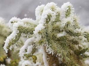 Зимовка кактусов, как ухаживать за кактусом зимой, как часто поливать кактусы зимой