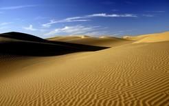 кактусы пустыни