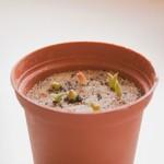 Как вырастить кактусы из семян?