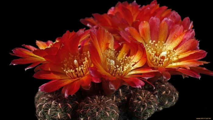 wp-kaktus9