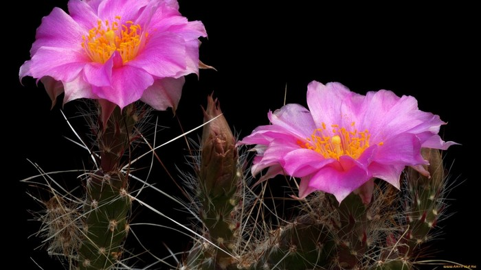 wp-kaktus8