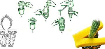 Как и Когда лучше пересаживать кактус? горшок для пересадки, посуда, принадлежность. Что нужно для пересадки кактуса.