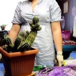Размножение, посев и пересадка кактусов