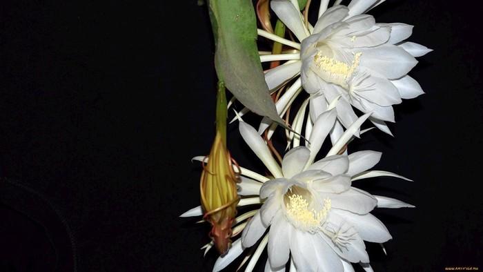 wp-kaktus14g1