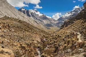 Кактусы высокогорий Южной Америки, Высокогорья северных Андов