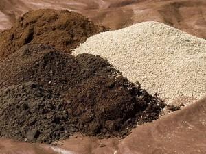 Почва для кактуса, состав и свойства - главные критерии ухода за кактусами