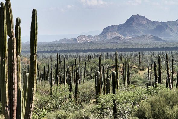 Типичный ландшафт Мексики - горы, пустыня и кактусы