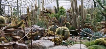 Выращивание кактусов в теплице или парнике