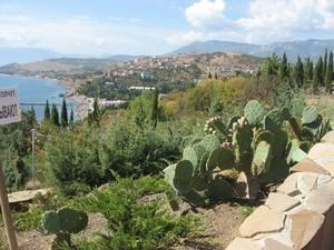 Выращивание кактусов в открытом грунте летом