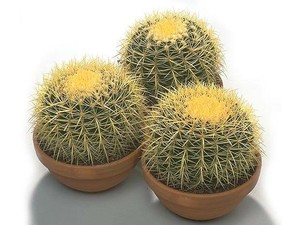 Посуда для кактуса - важная часть ухода за кактусами