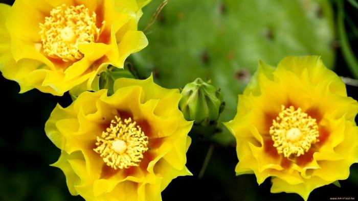 wp-kaktus10g1