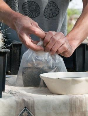 Черенкование кактуса с использование парника