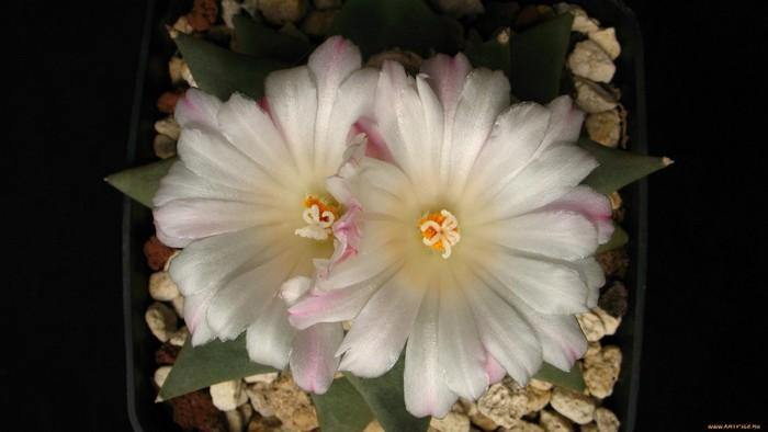 wp-kaktus11g1