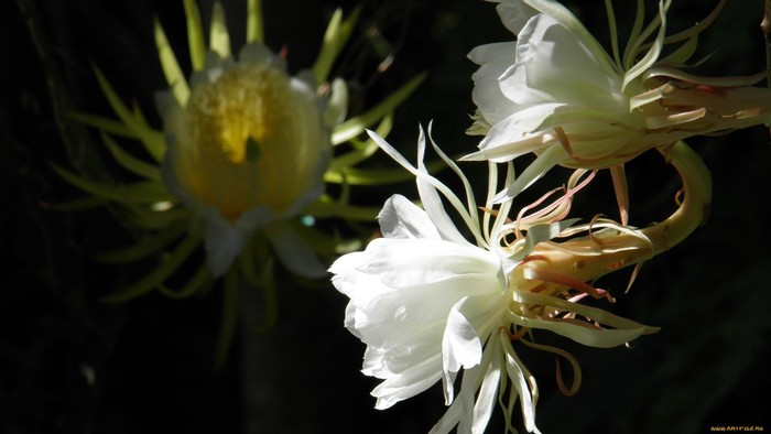 wp-kaktus12g1