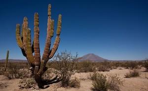 Мексика и южные штаты Америки — классические области распространения кактусов