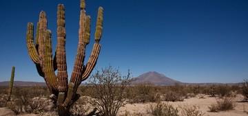 Мексика и южные штаты Америки — классические области распространения кактусов, Естественные места обитания кактусов, мета обитания кактусов, где растут кактусы, Американские континенты - историческое место обитания кактусов