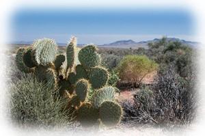 Родина кактуса, место обитания кактусов, где появился кактус, кактусы, какая у кактусов родина