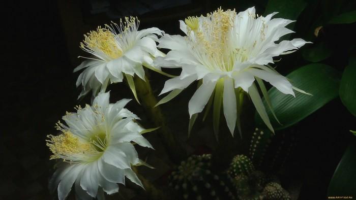 wp-kaktus7g1