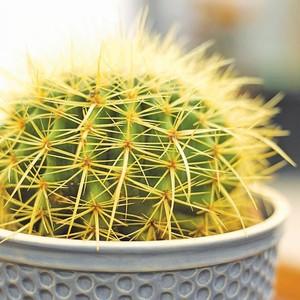 Свет для кактусов, уход за кактусами и правильный свет