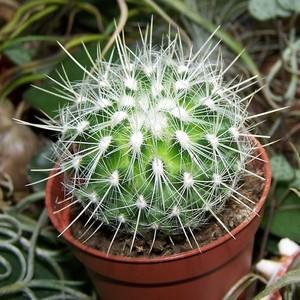 Семейство кактусов, колючки кактусов, кактусы, кактусы - прекрасное семейство растений
